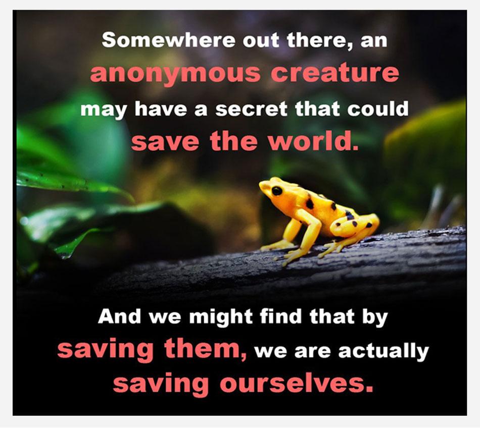 Saving Frog